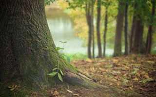 Что относится к лесным землям? раскладываем по полочкам
