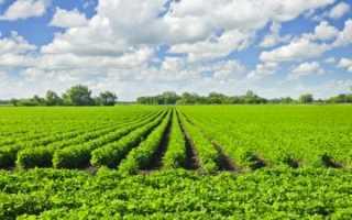 Что такое бессрочная аренда земельного участка, как оформить ее в законное владение?