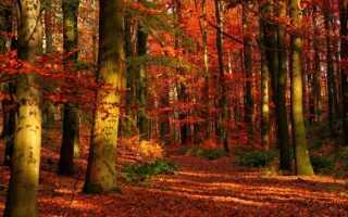 Группы и категории лесов — особенности, характеристики и описание