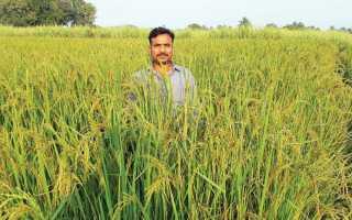 Статья 79 зк рф. особенности использования сельскохозяйственных угодий