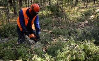 Лес восстановится сам